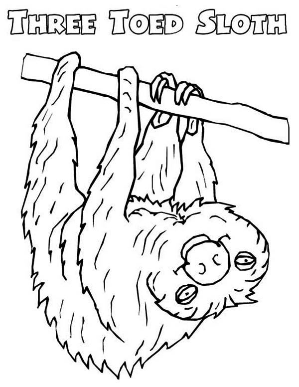 Sloth, : Picture of Sloth Coloring Page