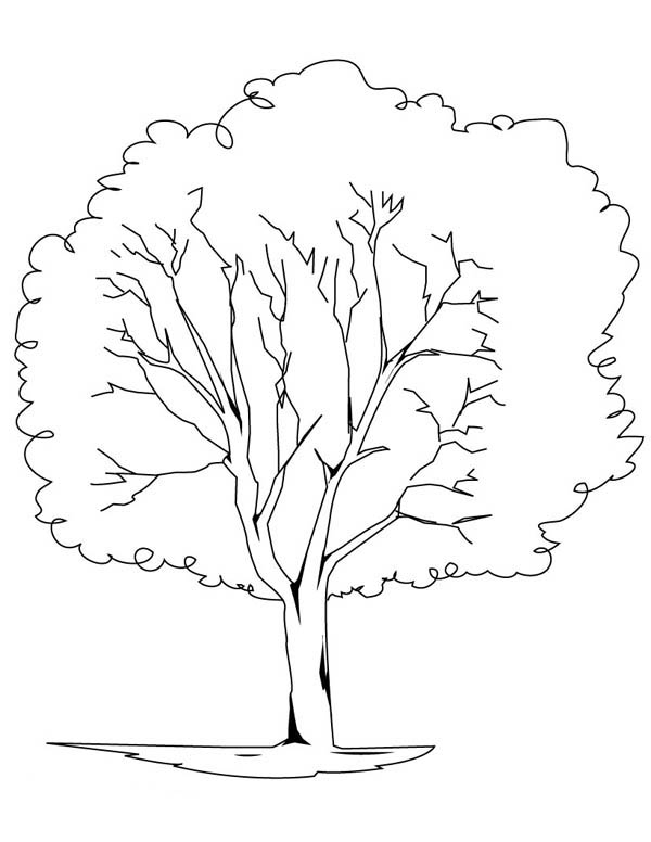 planting oak tree coloring page - Bare Tree Coloring Pages Printable