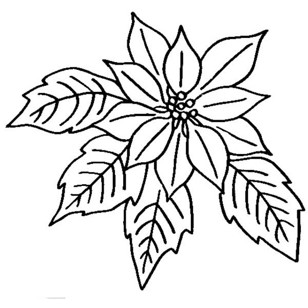 Imbloom Colouring Pages