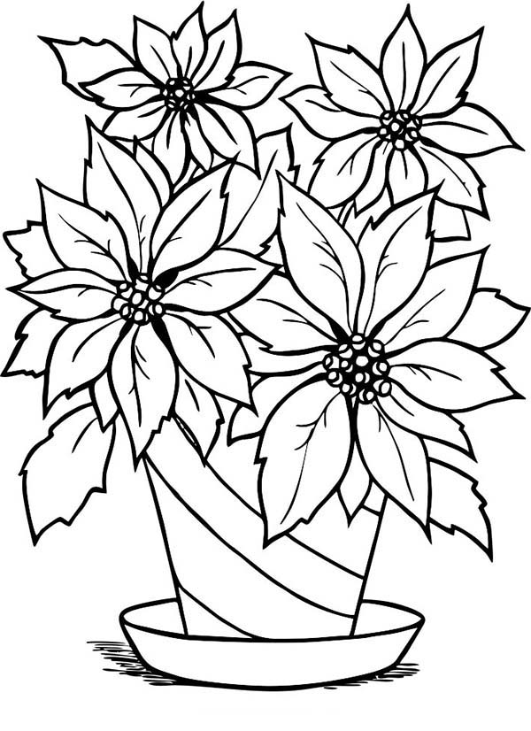 Poinsettia In Flowerpot Coloring Page