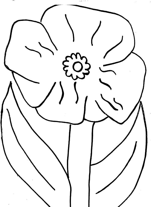 fantastic poppy colouring page for you close up picture of poppy