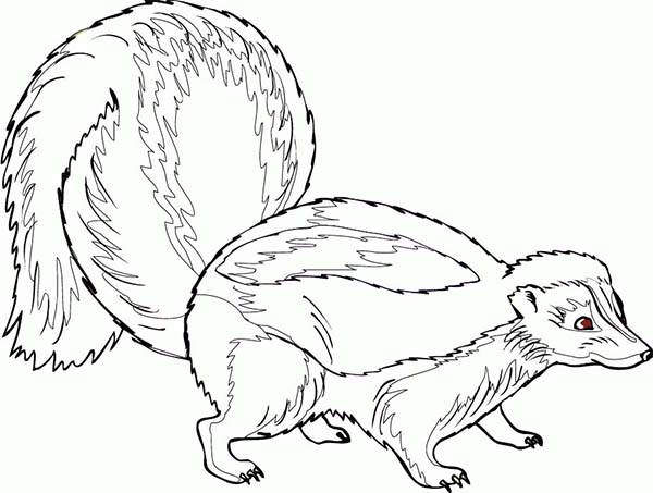skunk coloring pages - photo#33