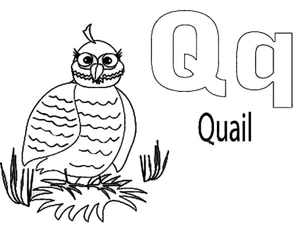 Quail, : Quail Incubating Coloring Page