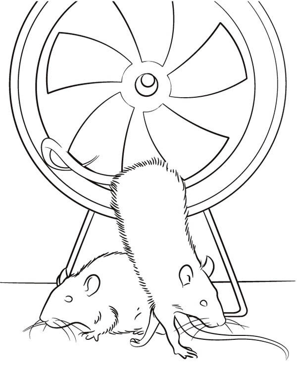 Guinea Pig, : Rat Exercise in Guinea Pig Coloring Page