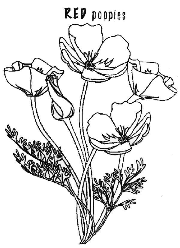 Poppy, : Red Poppy Coloring Page