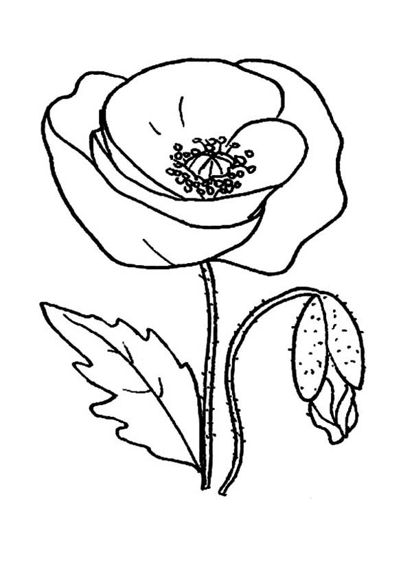 Red Poppy Picture Coloring Page  Color Luna