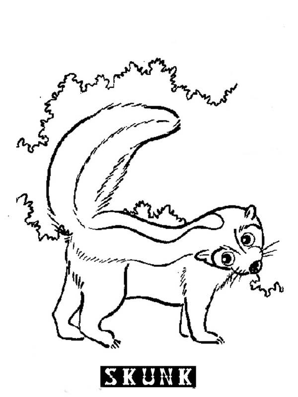 S is for Skunk Coloring Page Color Luna