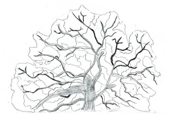 Oak Tree, : Sketch of an Oak Tree Coloring Page