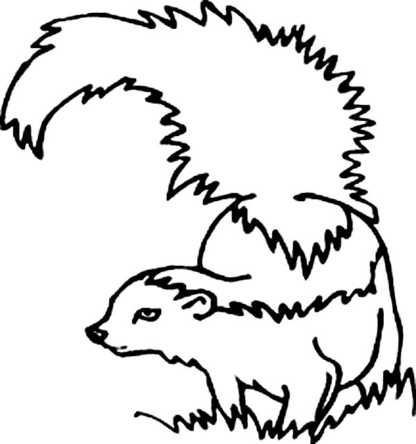 Skunk Cautious Of Enemy Coloring Page
