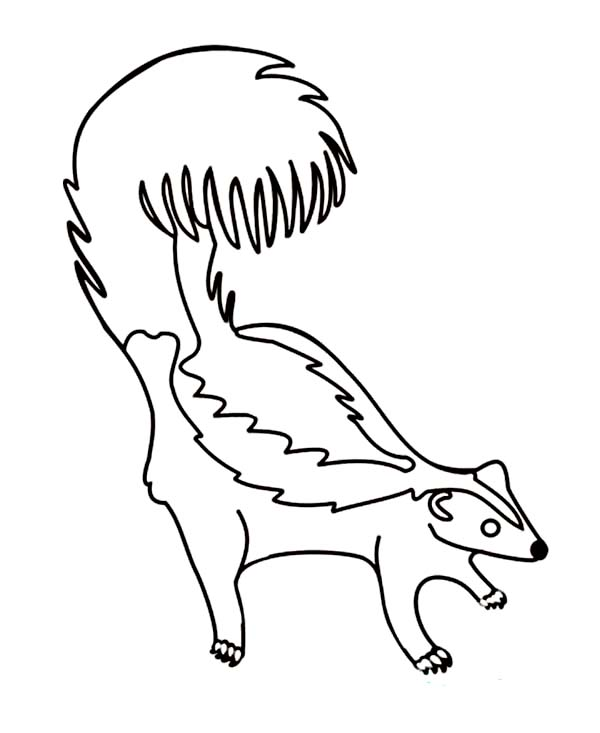 Skunk, : Skunk feel Threatened Coloring Page