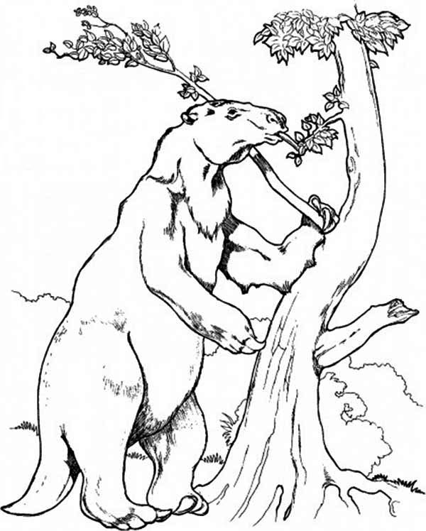Sloth, : Sloth Climb a Tree Coloring Page