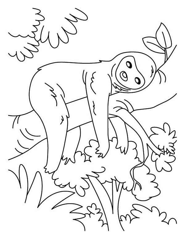 Sloth, : Sloth Sleeping Coloring Page