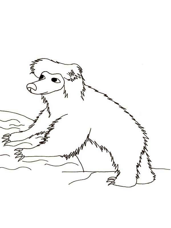 Sloth, : Sloth Take a Bath Coloring Page