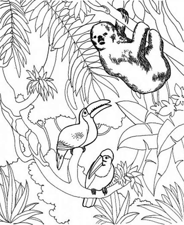 Sloth, : Sloth and Birds Coloring Page
