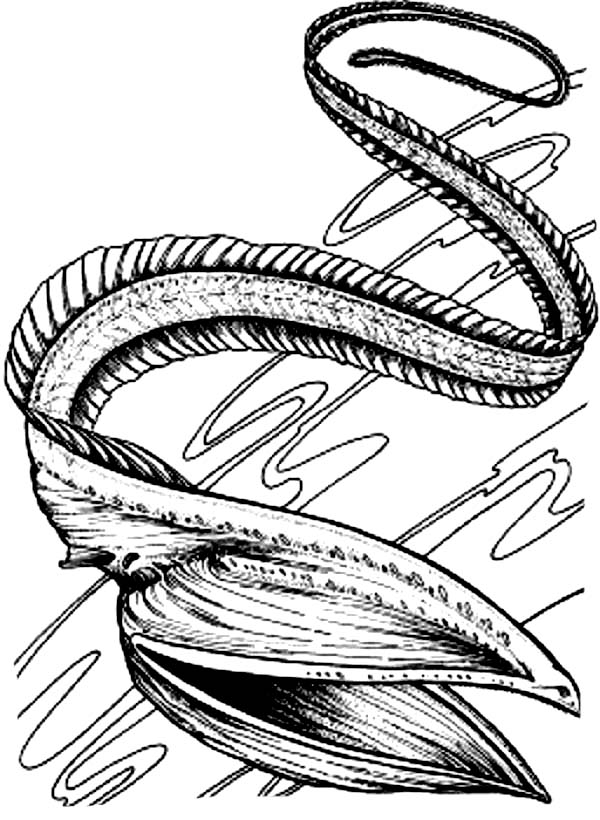 Eel, : Terrifying Sea Eel Coloring Page