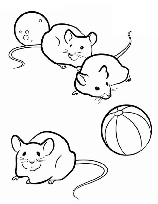 Three Mice in Guinea Pig Coloring Page | Color Luna