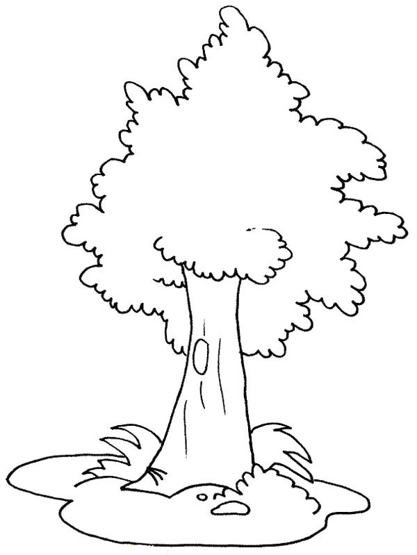 Oak Tree, : White Oak Tree Coloring Page