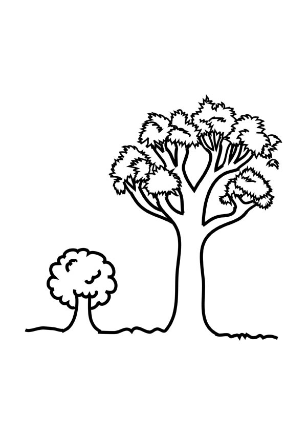 Oak Tree, : Young Oak Tree Coloring Page