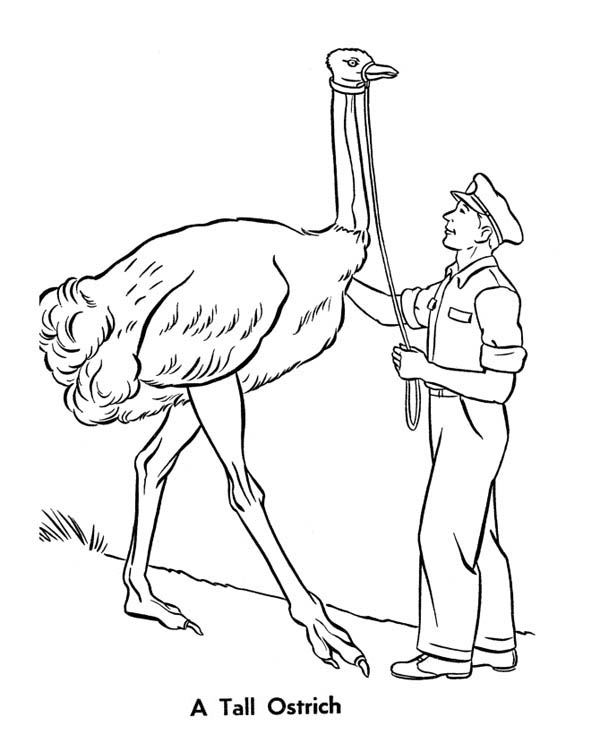 A Tall Ostrich Coloring Page