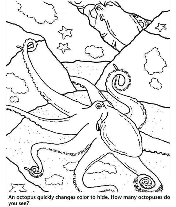 Octopus, : An Octopus Quickly Changes Color to Hide Coloring Page