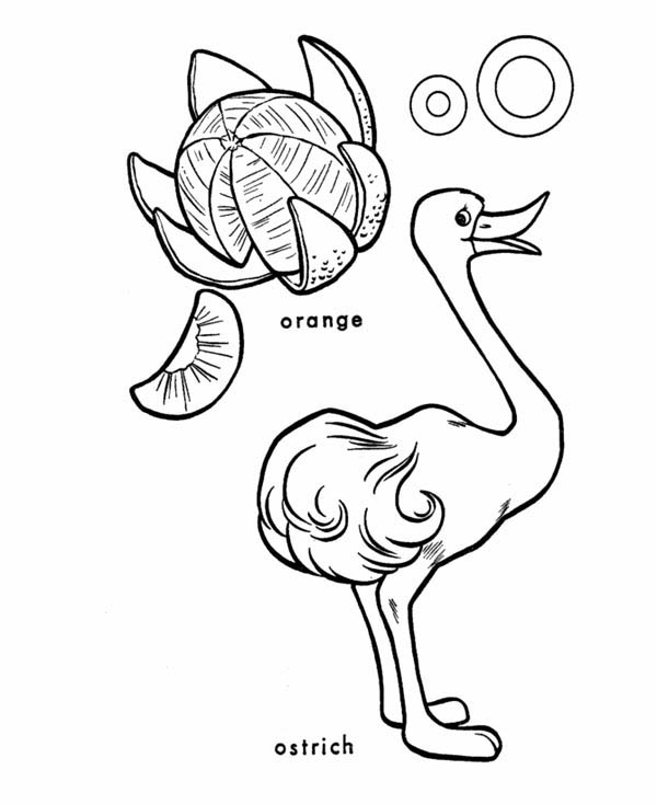 Ostrich, : An Ostrich and An Orange Coloring Page