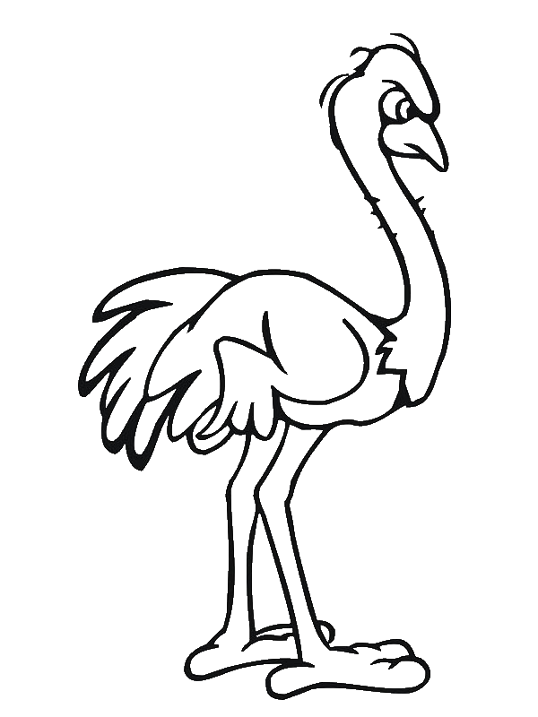 ostrich coloring page - index of wp content uploads 2014 04