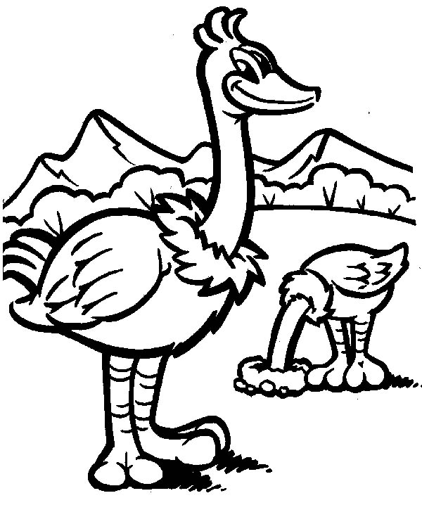 Ostrich, : Awesome Drawing Ostrich Coloring Page