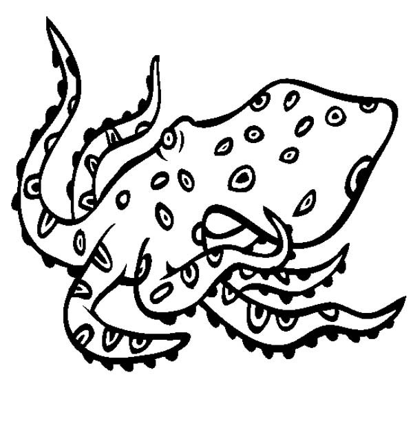 Octopus, : Blue Ringed Octopus Coloring Page