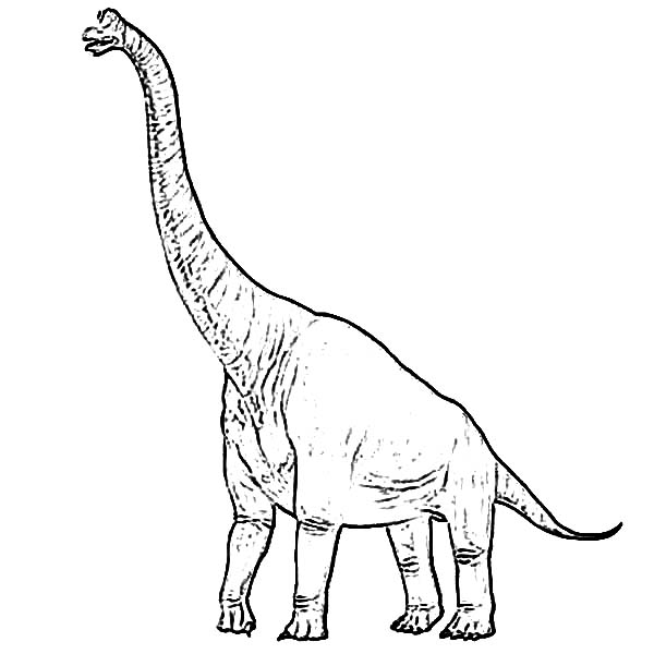 Brachiosaurus, : Brachiosaurus Coloring Page for Kids
