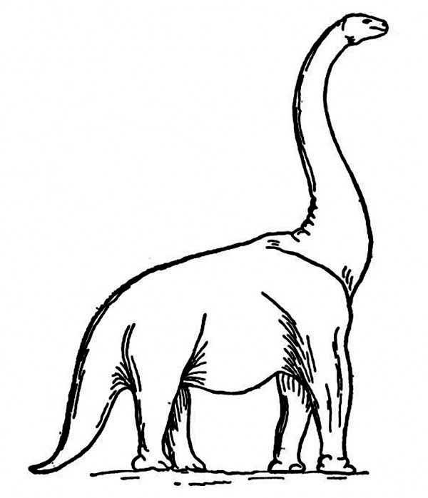 Brachiosaurus, : How to Draw a Brachiosaurus Coloring Page
