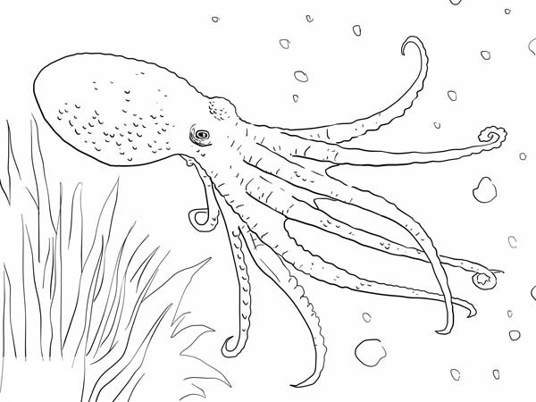 Octopus Swim Under The Sea Coloring Page