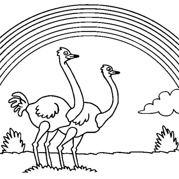 Ostrich, : Ostrich Couple Under the Rainbow Coloring Page
