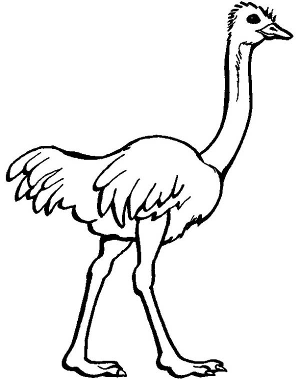 free coloring pages of ostrich