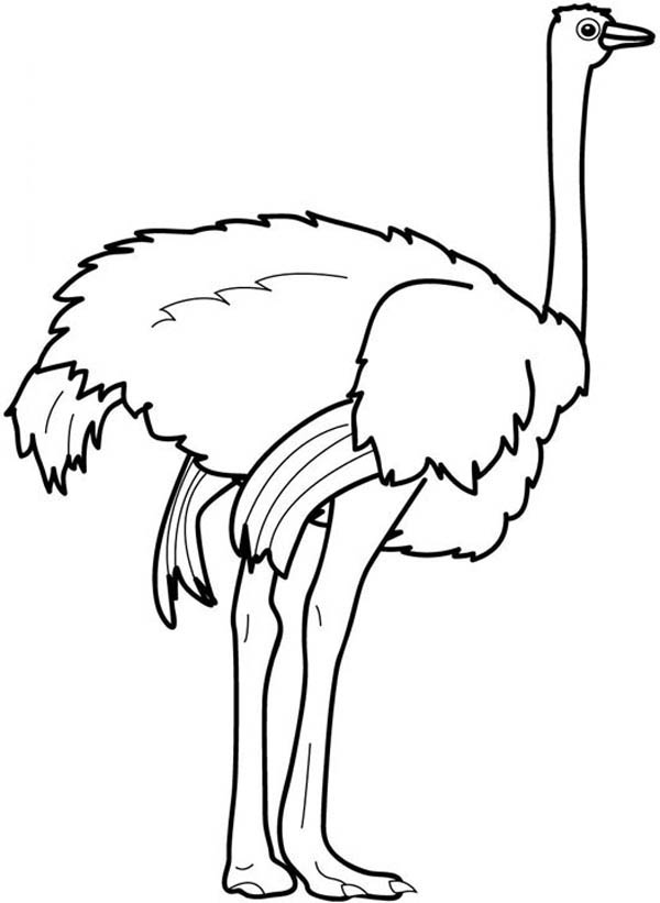 Ostrich Strong Feet Coloring Page Color Luna