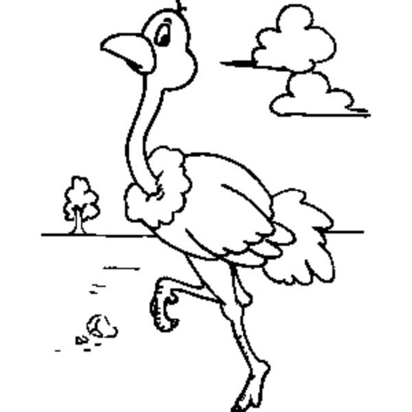 Ostrich, : Ostrich Walking Around Coloring Page