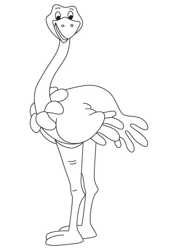 Ostrich, : Somali Ostrich Coloring Page