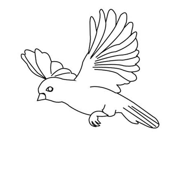 Birds, : Amazing Bird Flying Floating Coloring Page