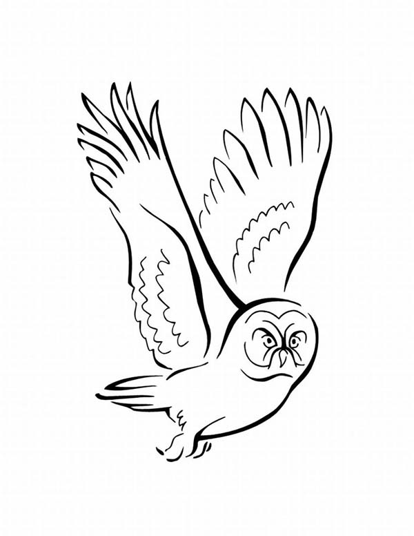 Birds, : An Owl Bird Flying Seeking for Prey Coloring Page