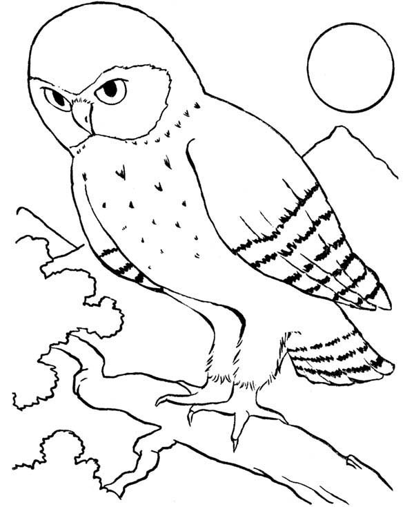 Birds, : An Owl Bird Howling in the Night Coloring Page