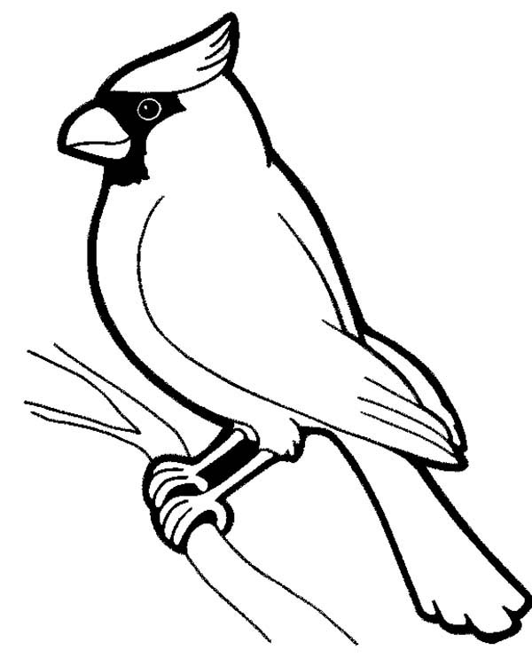 Birds, : Awesome Bird Standing on Tree Branch Coloring Page