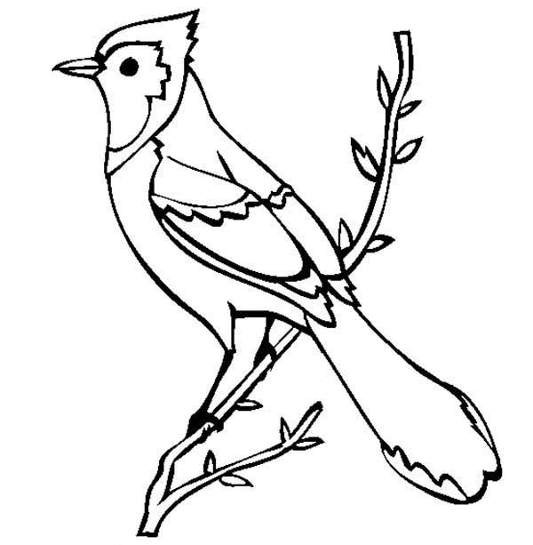 Birds, : Beautiful Blue Jay Bird Coloring Page
