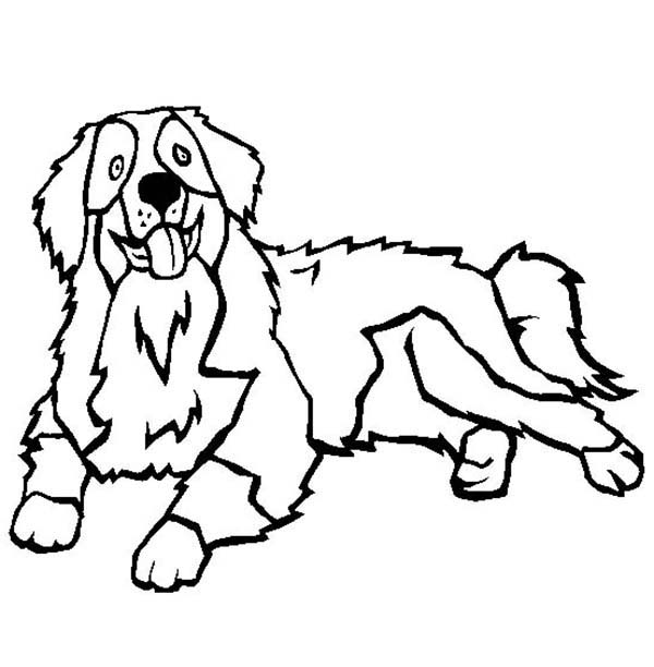 Dogs, : Bernese Mountain Dog Coloring Page