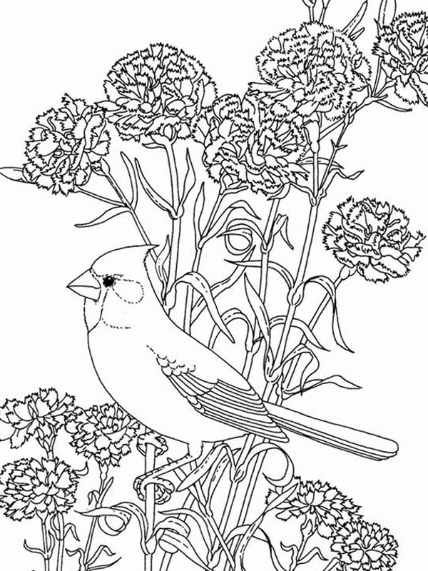 Bird Among Beautiful Flowers Coloring Page