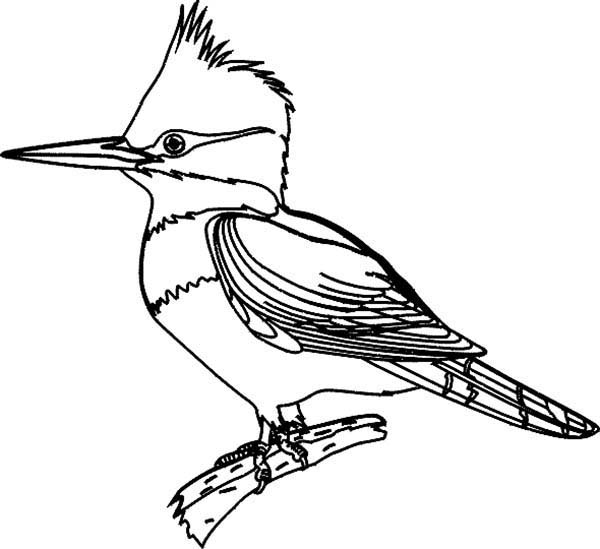 Birds, : Bird Coloring Page for Kids