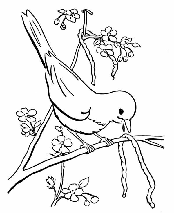 Birds, : Bird Eat Little Snake Coloring Page