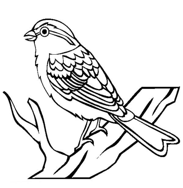 Birds, : Chipping Sparrow Bird Coloring Page