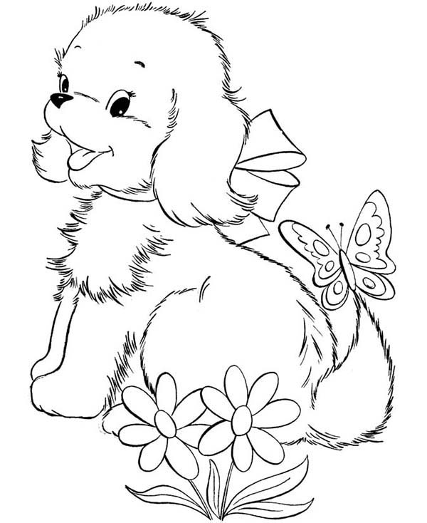 dog breed information search results fun coloring pages