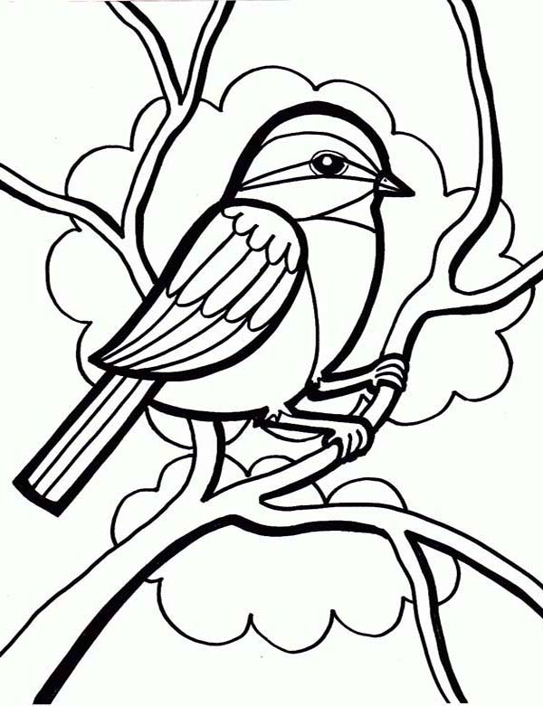 Drawing a Little Cute Bird Coloring Page | Color Luna
