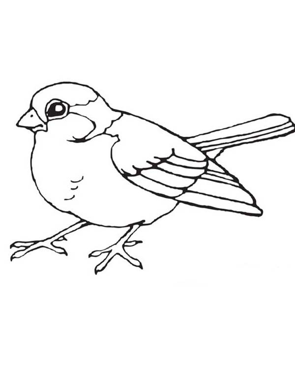 Birds, : Little Bird Coloring Page