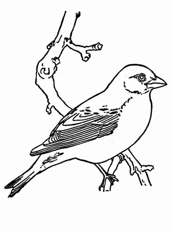 Birds, : Picture of Bird Coloring Page